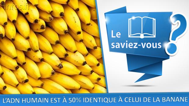 ADN humain 50% identique à celui de la banane