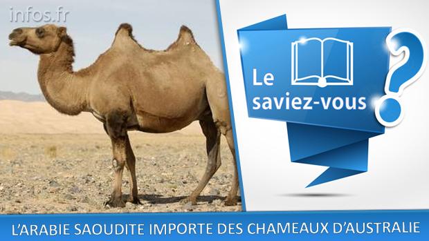 L'Arabie Saoudite importe des chameaux d'Australie