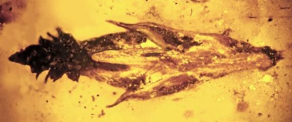 fossile ergot seigle