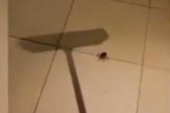 L'araignée surprenante
