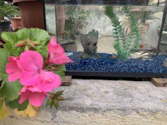 comment choisir éclairage aquarium