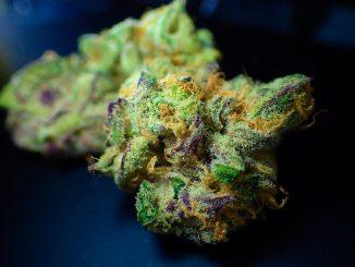 Cannabis: légalisation «contrôlée»