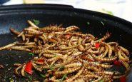 Les insectes en tant qu'aliments, feu vert de l'UE pour les mites de farine : comment seront-elles vendues ?