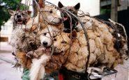 Le festival de Yulin 2021 en Chine : ce qu'il est et la dénonciation des défenseurs des animaux
