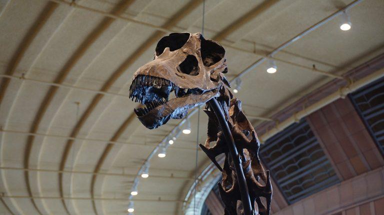 Variété de sauropode