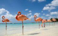 Flamingo Beach, la plage bondée de flamants roses