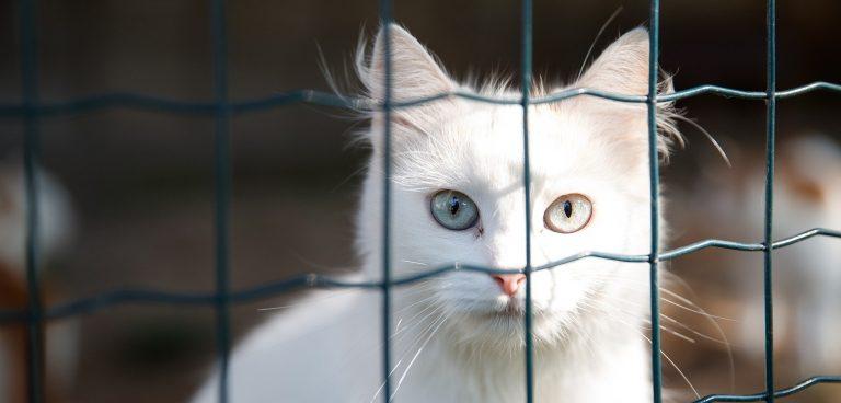 Abandons accrus des chats et des chiens
