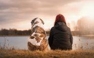 La Colombie propose une loi sur le congé payé en cas de décès d'un animal de compagnie