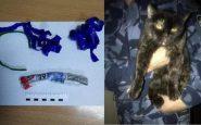 Un chat trafiquant de drogue arrêté en Russie : il transportait de la marijuana cachée dans son collier