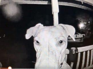 Mary Lynn très surprise de la façon dont sa chienne Rajah retourne à la maison